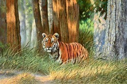 Young Tiger, Pench National Park, India by Tony Forrest -  sized 30x20 inches. Available from Whitewall Galleries